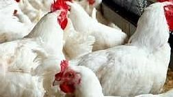 Rapid response teams formed to deal with bird flu
