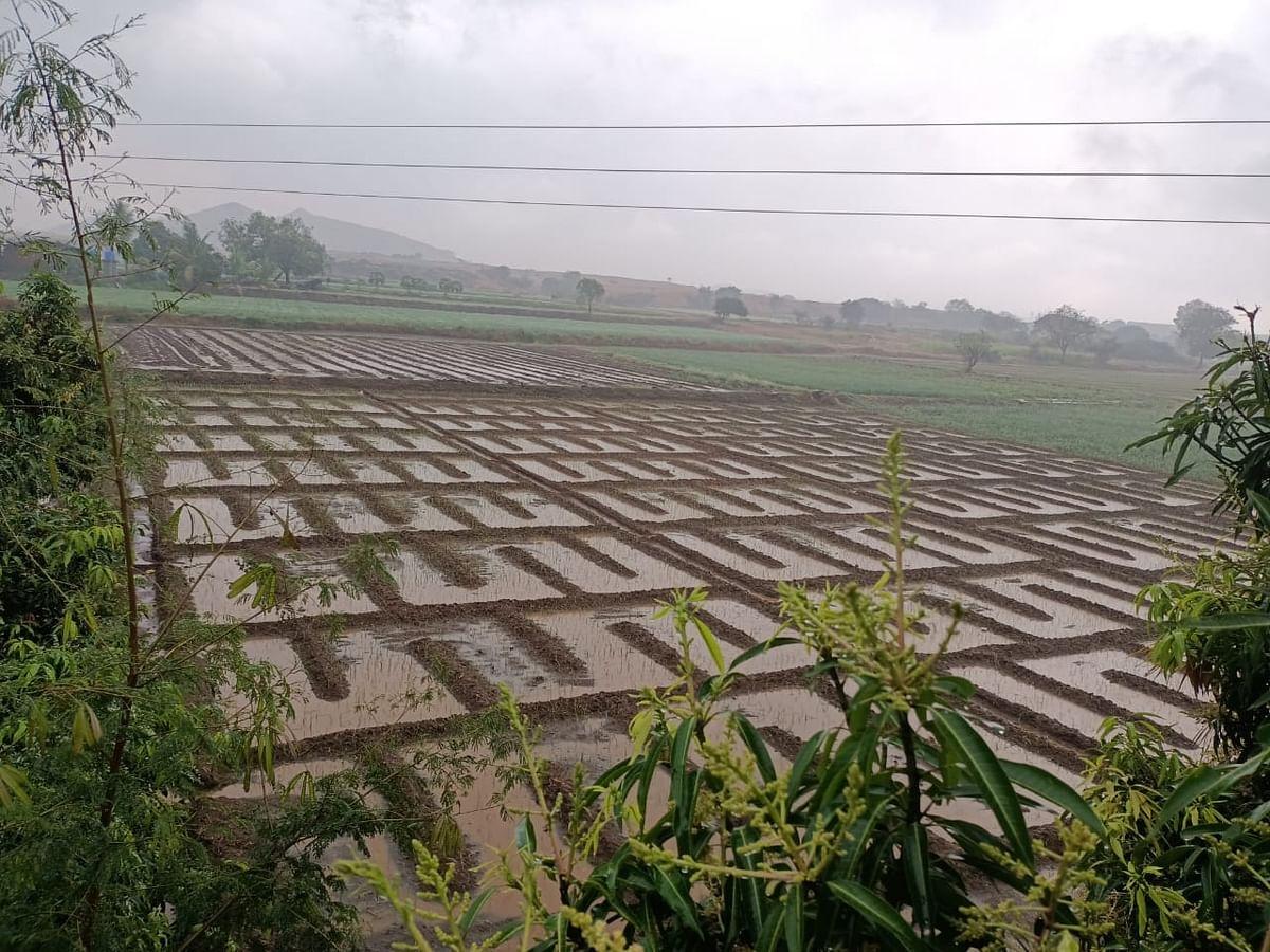 बेमोसमी पावसाने  झोडपले; द्राक्षबागांमध्ये गुडघाभर पाणी
