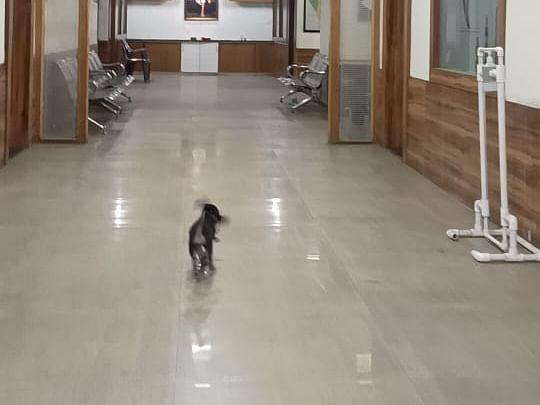 कुत्र्याचे लहान पिल्लू 10 रुपये, मोठे कुत्रे 50 रुपये आणि 'यासाठी' तब्बल 100 !