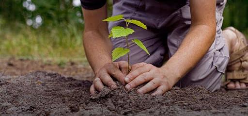 शिवरायांच्या गडावरही 'हरितक्रांती'...!