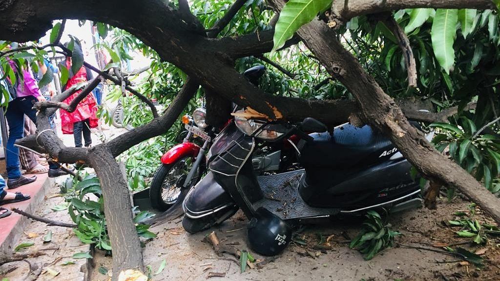 वकीलवाडीत झाड कोसळले; दुचाकींचे नुकसान, पाहा फोटो