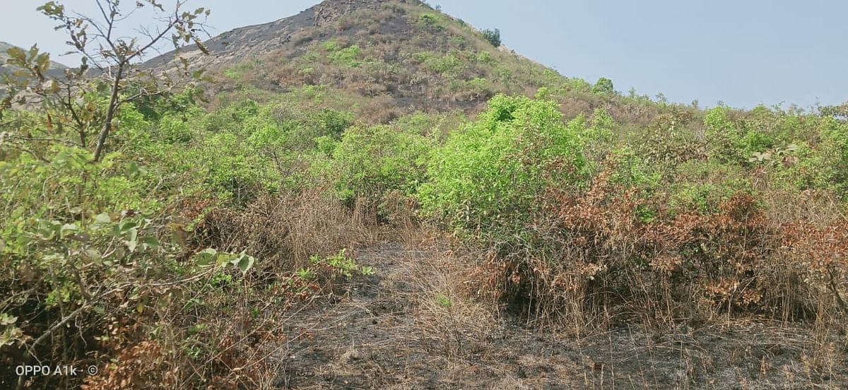 गणेशगाव शिवारात वणवा; हजारो झाडे जळून खाक