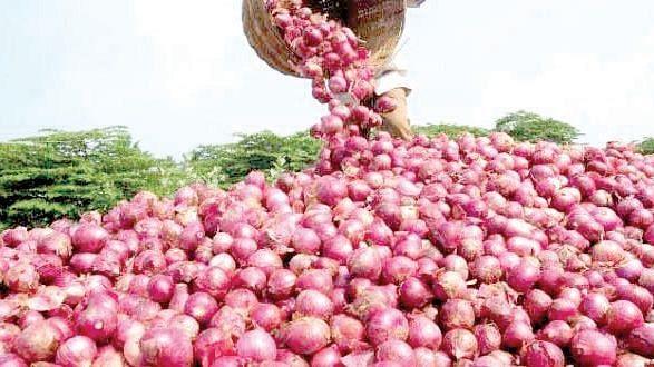 Fresh summer onions arrive at Lasalgaon