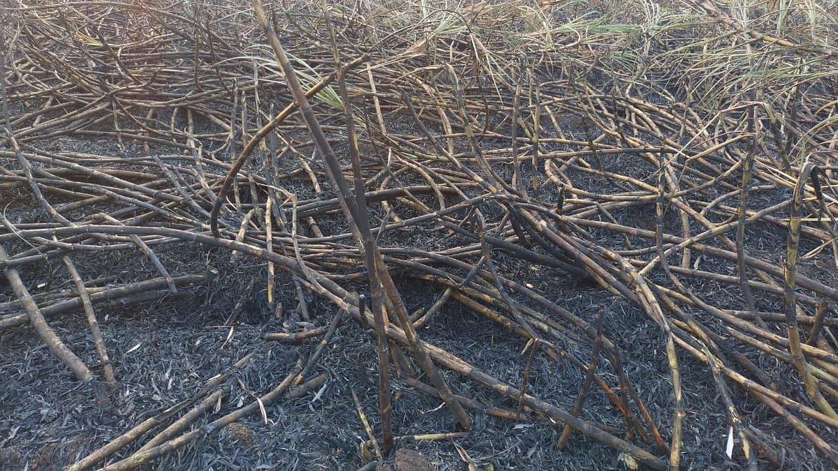 भरतपूर : वीजतारा घर्षणाने ऊसाला आग; तीन लाखांचे नुकसान