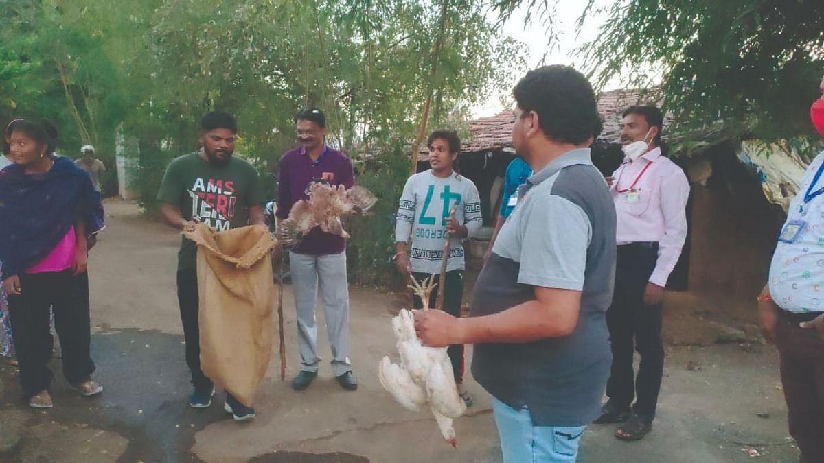 पालिकेच्या कर्मचार्यांमार्फतही कोंबडया पकडण्याची मोहिम सुरु