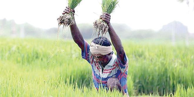 कृषी धोरणासाठी हवे देशी प्रारुप!