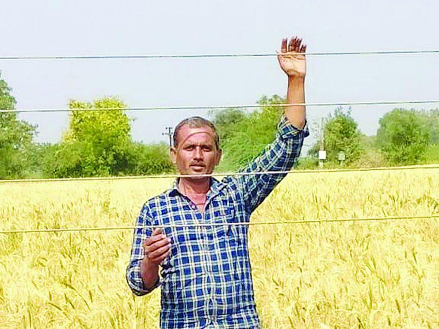 शेतात लोंबकळणार्या तारांमुळे शेतकर्याचा आत्महत्येचा प्रयत्न