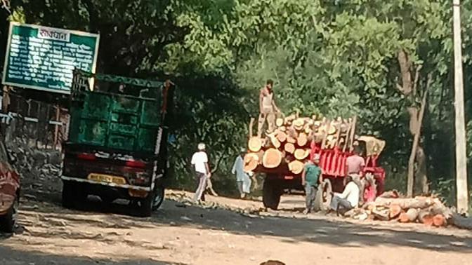 जिवंत झाडांची कत्तल भोवली; तीन वनकर्मचारी निलंबीत