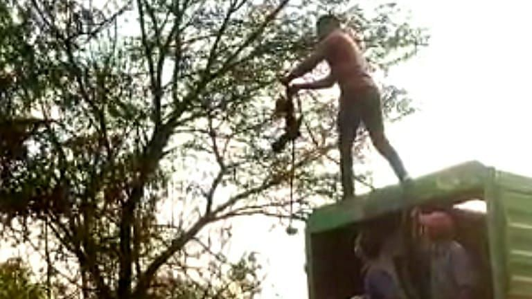 College girls, ghantagadi workers save bird's life
