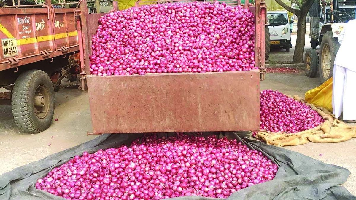 Onion prices fall by 50%