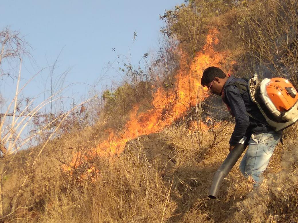 करंजीच्या जंगलाला लागलेली आग बारा तासानंतर विझवण्यात यश