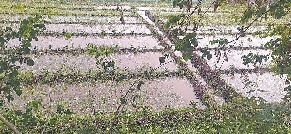 धुळ्यात अवकाळी पाऊस, काही भागात गारपीट