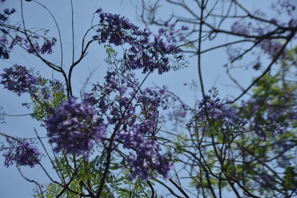 वसंत ऋतूत फुलले निसर्गाचे सौदर्यं