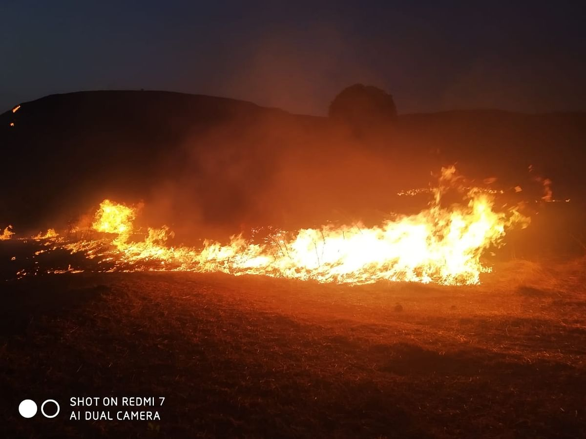 हरसूल वाघेरा घाटात वनसंपदेला आग