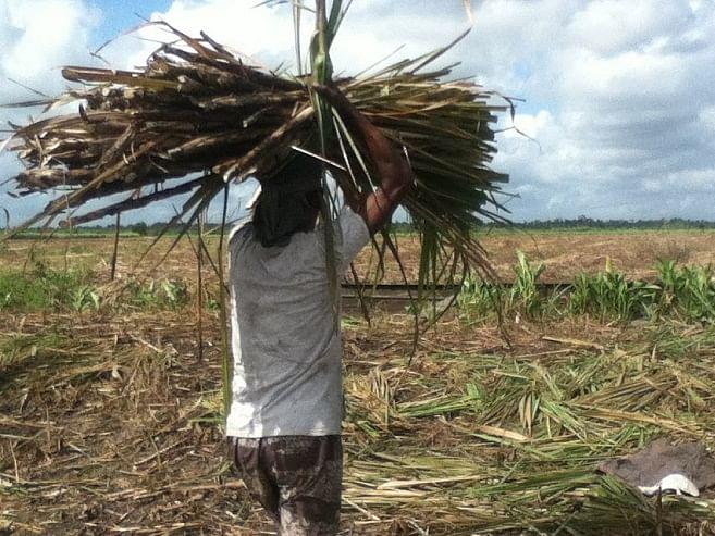 राज्यातील साखर कामगारांच्या थकीत वेतनावर निर्णय घेण्यासाठी समिती स्थापन