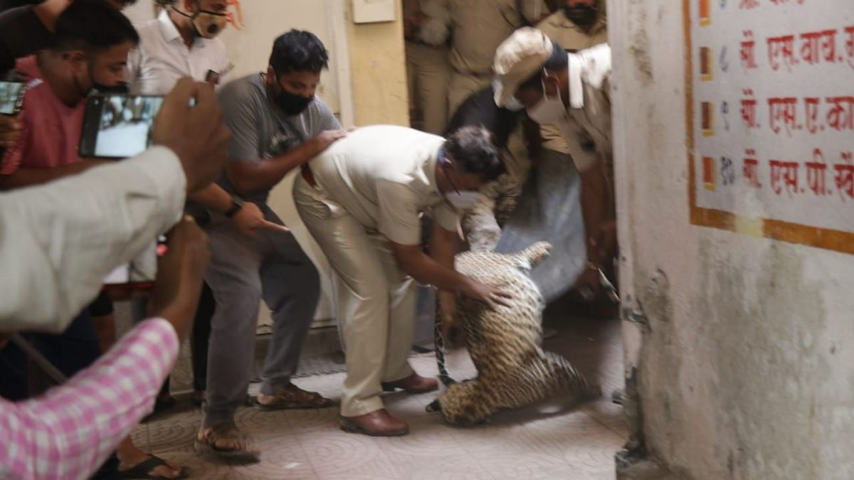 Leopard rescued from Gangapur Road area