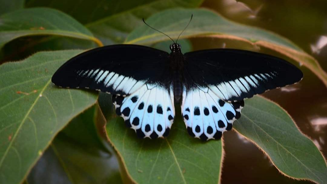 Habitat preservation: A key to save species