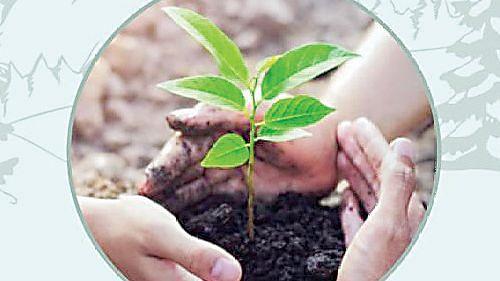 जागतिक पर्यावरण दिनानिमित्ताने दैनिक 'देशदूत'चा नाशिक वनराई उपक्रम