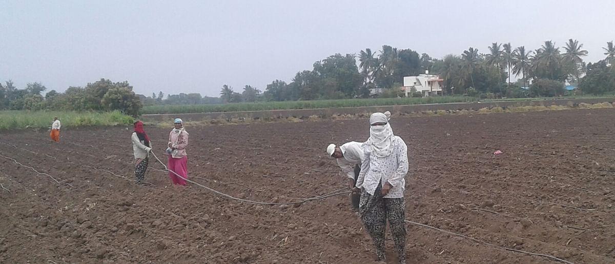 राहुरी तालुक्यातील शेतकर्यांना लागले कपाशी लागवडीचे वेध