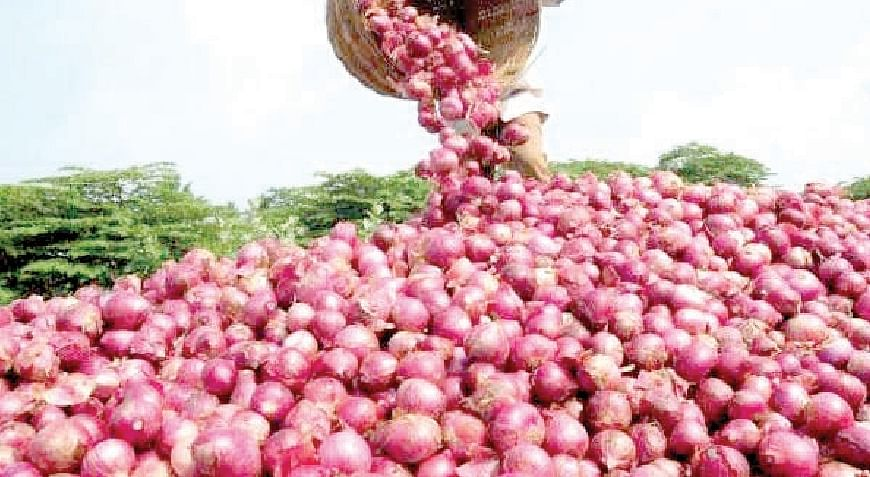 कांदा उत्पादनात घट; शेतकरी हवालदिल