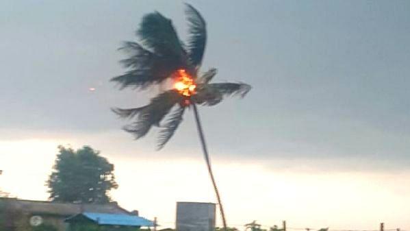 दिंडोरी : नारळाच्या झाडावर वीज कोसळली