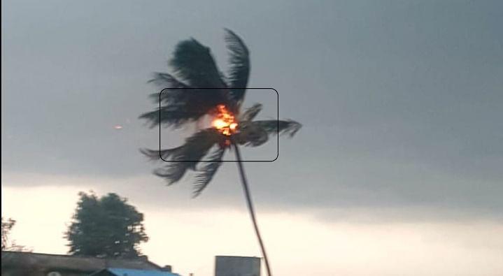 लोखंडेवाडी येथे नारळाच्या झाडावर कोसळली वीज