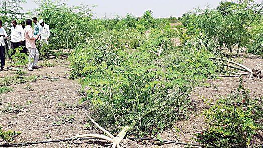 मालेगाव, बागलाण तालुक्यात वादळी पावसाचा तडाखा