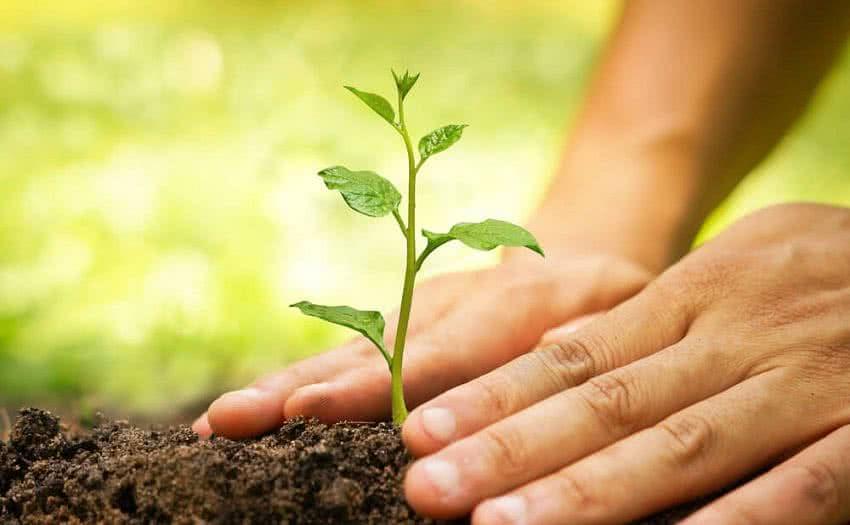 आईच्या अस्थींचे विसर्जन न करता केली वृक्ष लागवड