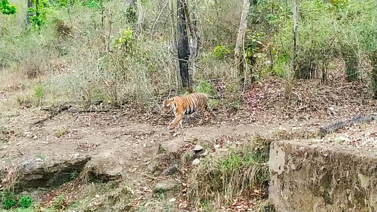 Sensitive forest ranges still awaiting RFOs