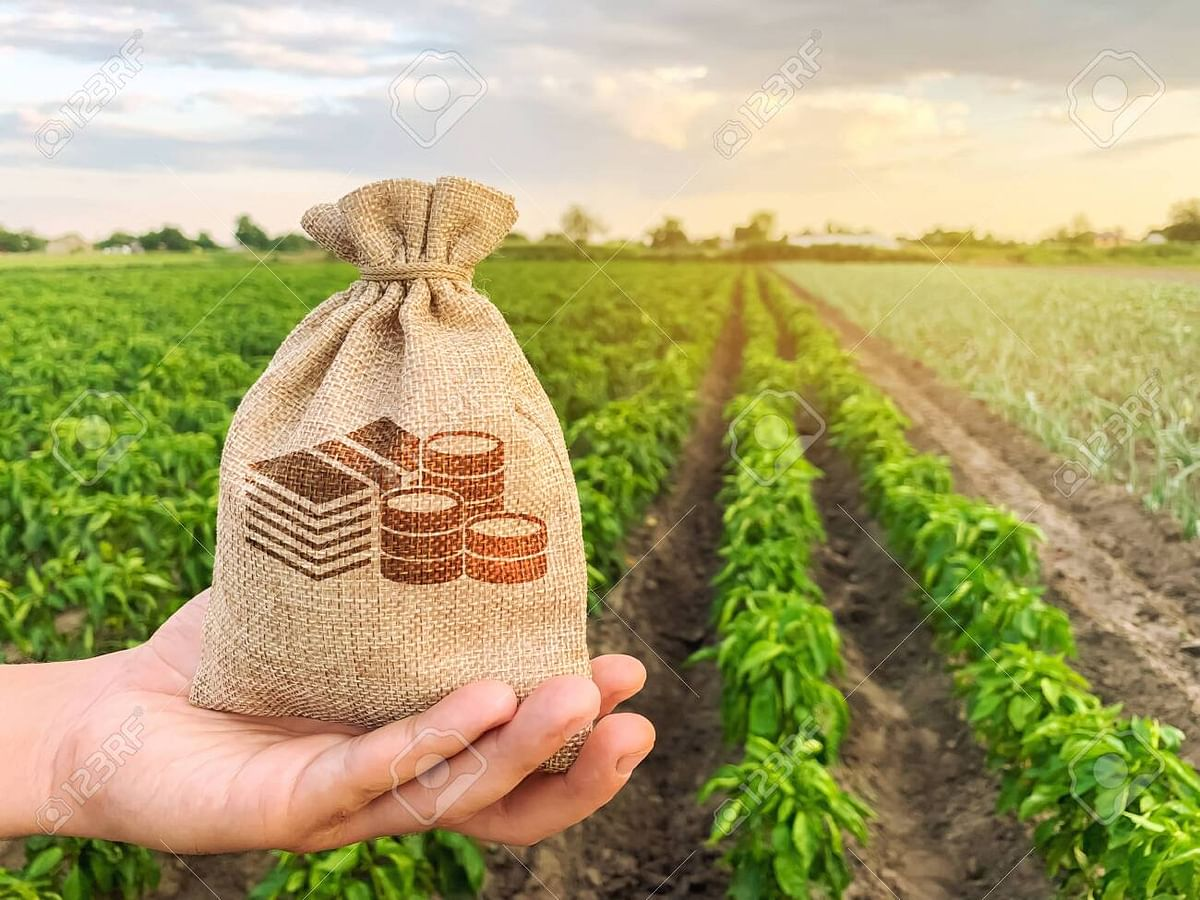कृषी दिन विशेष : शेतकरी उत्पादक कंपनीच्या माध्यमातून शेतकर्यांची समृध्दीकडे वाटचाल