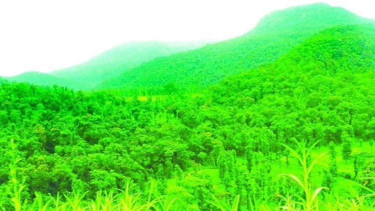 Confusion over the transfer of forest land