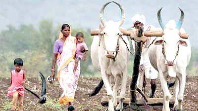 छोट्या शेतकर्यांविरुद्ध कारस्थान