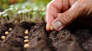 दुबार पेरणी करूनही निराशाच ; शेतकऱ्यानं उजललं हे पाऊल...