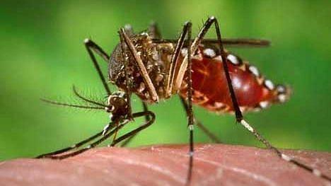 शहरात डेंग्यूचे 'इतके' रूग्ण