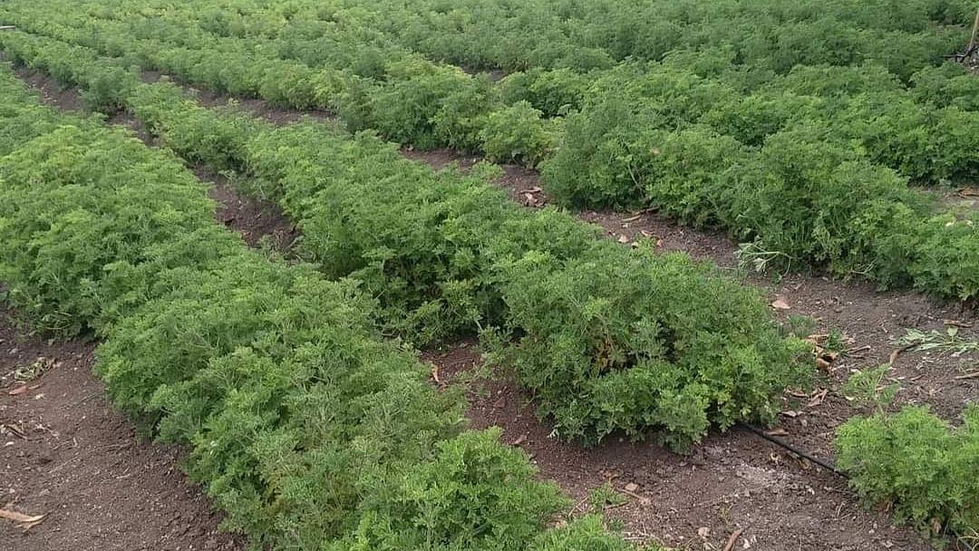 शेतीच्या अर्थकारणाला येणार सुगंध...