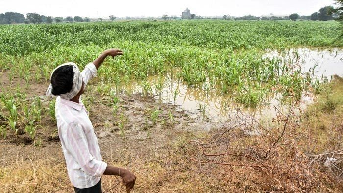 Monsoon gathers momentum; sowing picks up