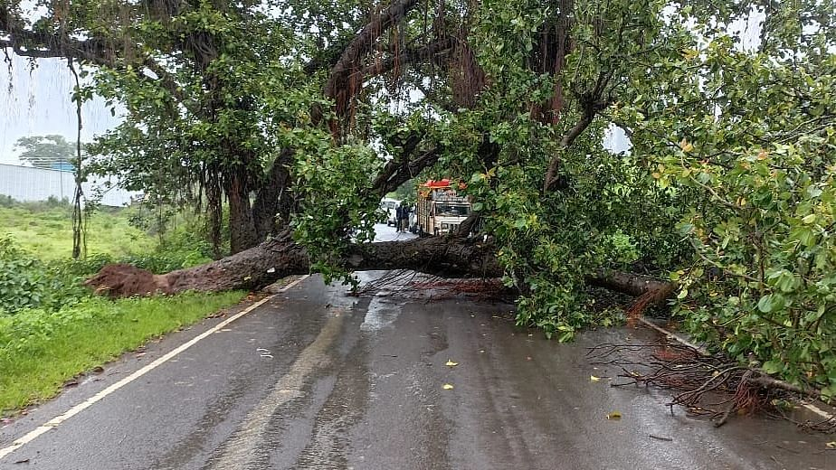सव्वाशे वर्षांपूर्वीचे वडाचे झाड कोसळले