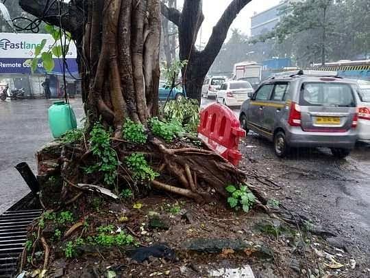 धोकादायक झाडांमुळे अपघात वाढले