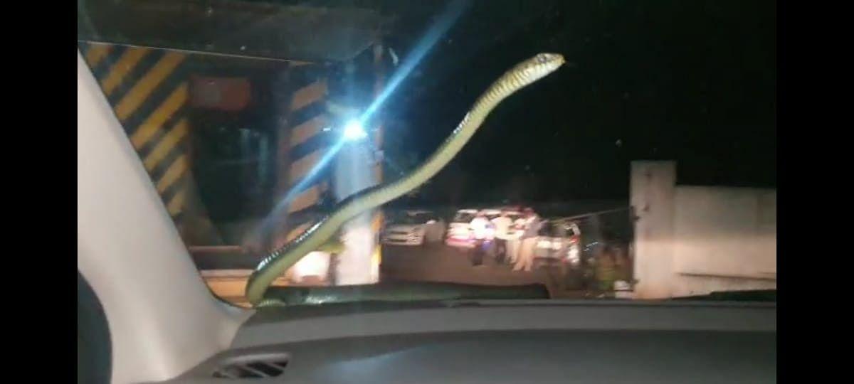 Video : साप जेव्हा चारचाकीने प्रवास करतो!