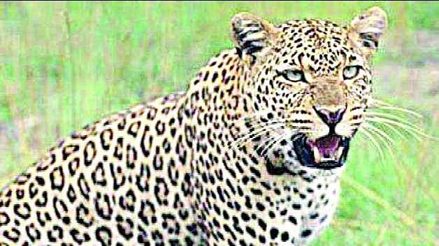 Development work, quarrying key reasons for man-animal conflict