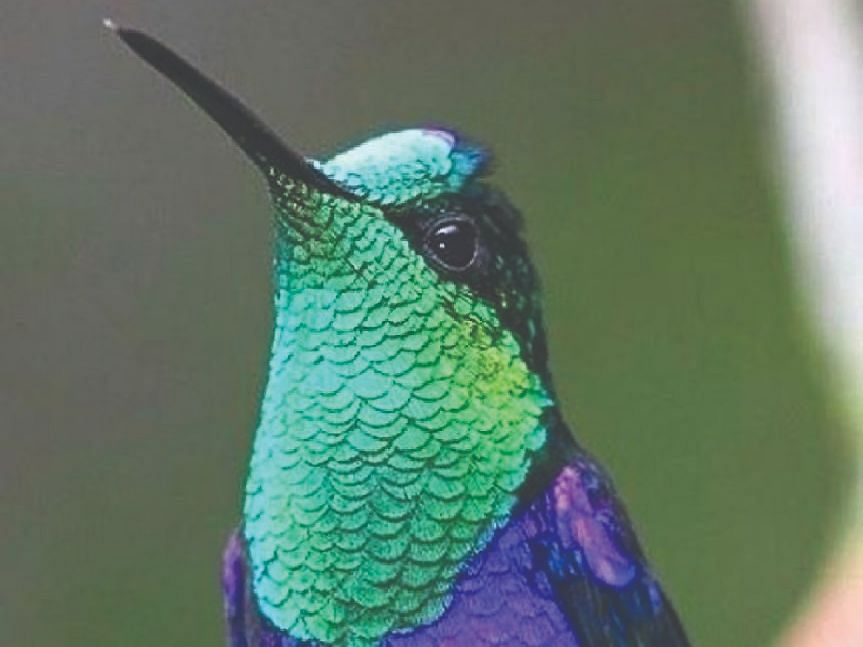 तोरणमाळ परिसर बनलाय रंगीबेरंगी पक्ष्यांचे आश्रयस्थान