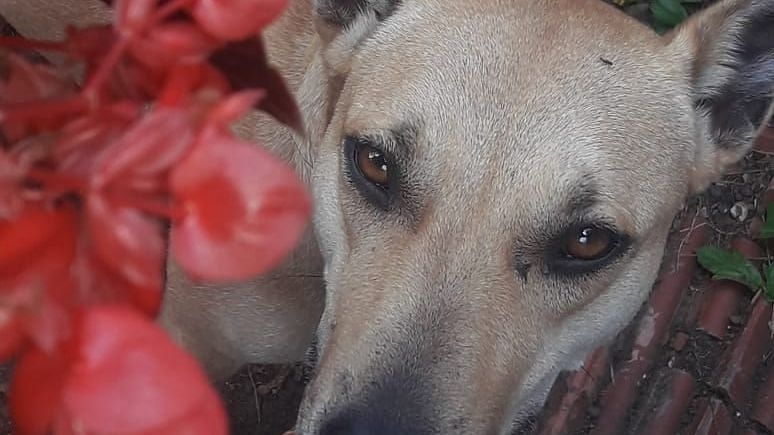 More than 150 stray dogs adopted in Nashik