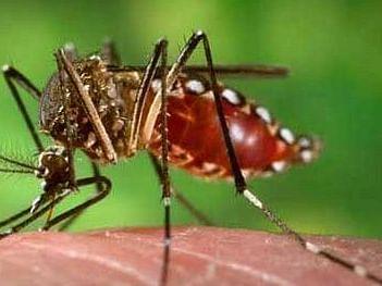 420 cases of dengue and 347 of chikungunya detected so far
