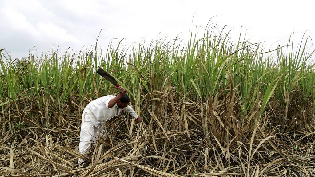 शेतकऱ्यांसाठी गोड बातमी! ऊसाच्या FRP मध्ये प्रतिटन 50 रुपयांची वाढ
