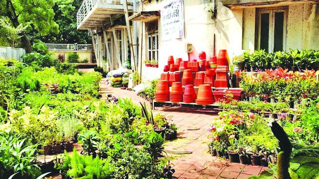 Nurseries register stagnant growth this year