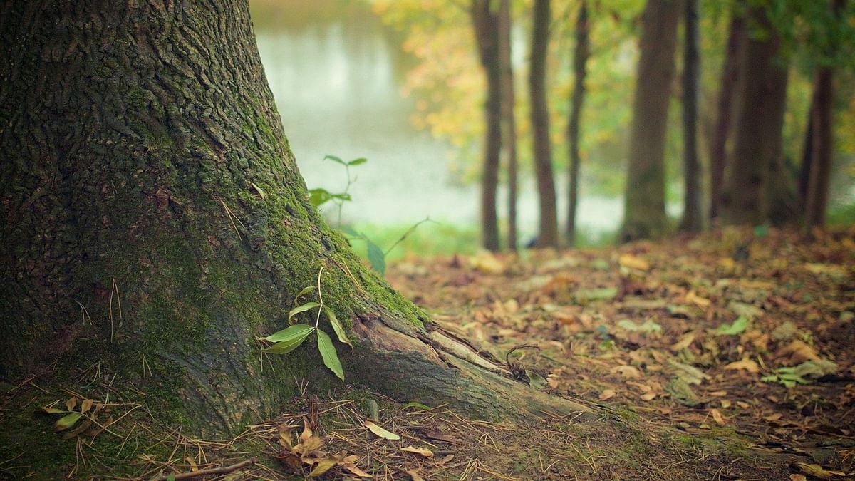 वन हक्क कायद्याची कासव गती