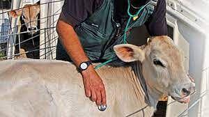 पशु वैद्यकीय अधिकार्यांच्या बदल्या