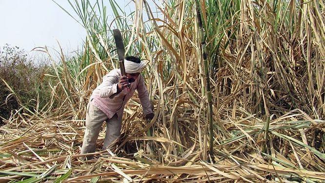 Sugar demand may go up ahead of Ganeshotsav