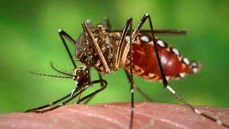 आता डेंग्यूची दहशत