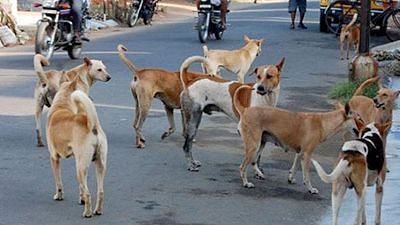 National Dog Day: Adopting stray dogs